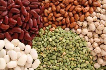 légumineuses protéines végétales