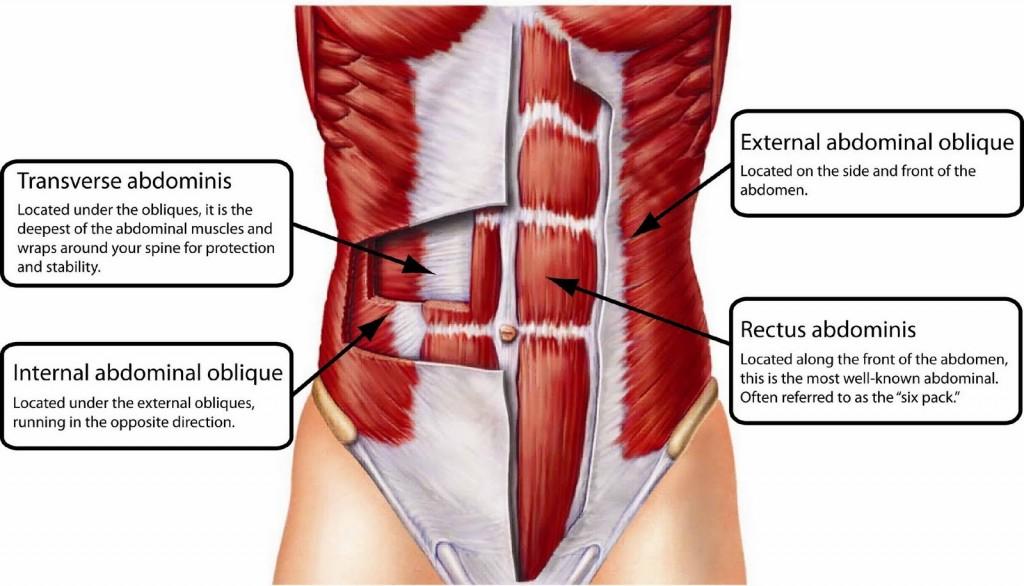 abdominal-transverse