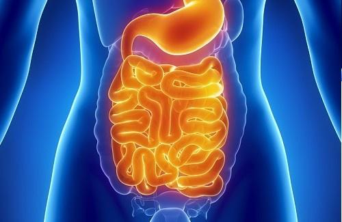 bienfaits probiotiques