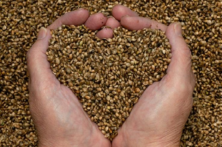 graines germées santé