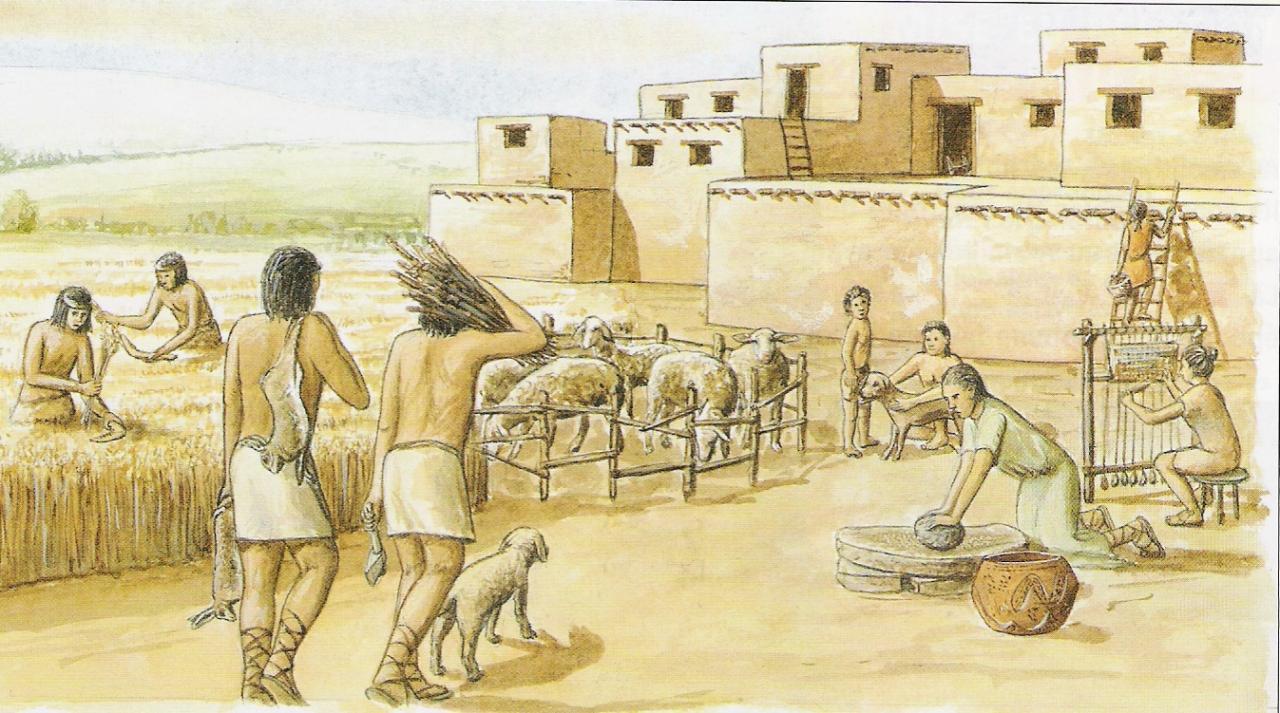 néolitique consommation céréales