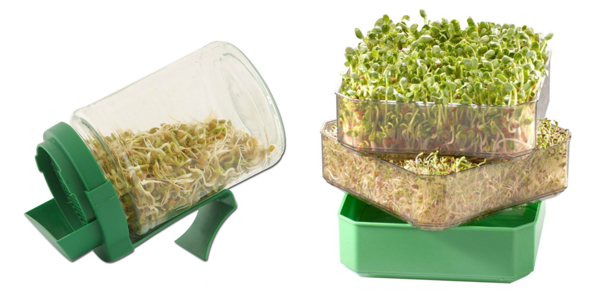 germoir graines germées
