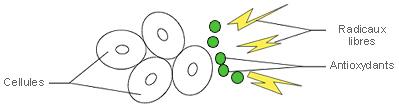 antioxydants radicaux libres par-balle