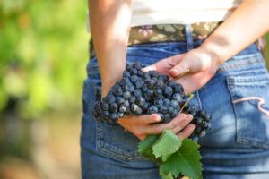 grappe de raisins bio
