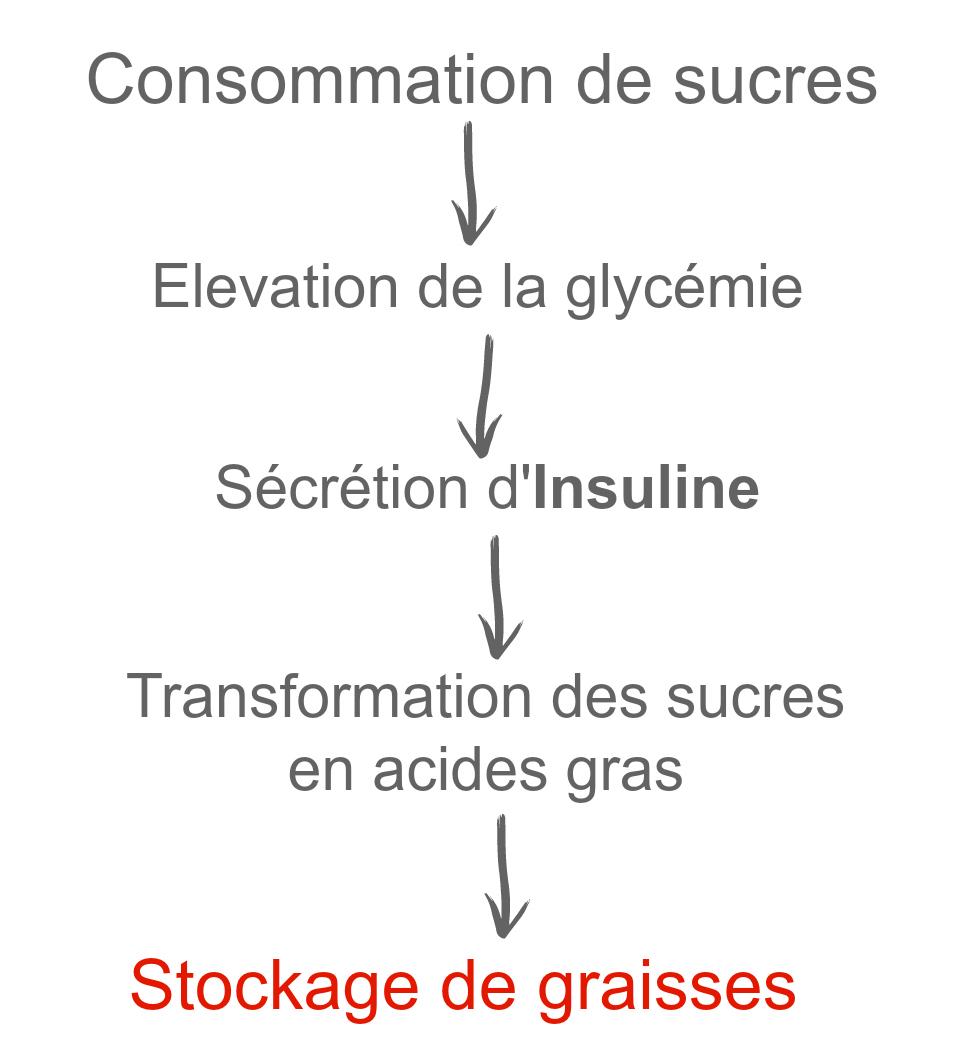 cycle du sucre insuline prise de poids