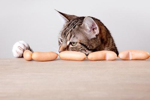 pottenger expérience chat