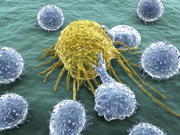 leucocytose digestive globules blancs