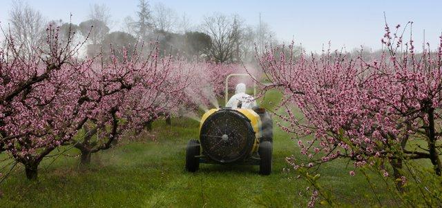 traitement pesticide etu ebcd